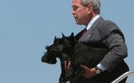 """Chuyện ít biết về những """"đệ nhất thú cưng"""" của các tổng thống Mỹ"""
