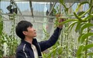 Vườn hoa phong lan nổi tiếng tại Vĩnh Phúc của chàng trai 9X – Nguyễn Văn Tùng
