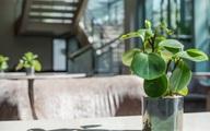 9 loại cây thanh lọc không khí trong nhà tốt nhất mà lại rất dễ trồng
