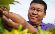 Chủ vườn mai Tết lo lỗ 15 tỷ đồng