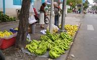 Chuối già Nam Mỹ khổng lồ xổ rẻ đầy đường