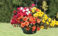 Mùa hè thì nên trồng hoa gì cho hợp lý?