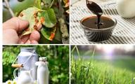 10 cách dùng sữa hết hạn để chăm sóc cây cực tốt mà đến 70% người không biết