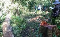 Trạm trưởng Kiểm lâm nhận tiền làm ngơ cho lâm tặc phá rừng