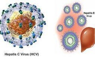 Viêm gan C nguy hiểm thế nào?