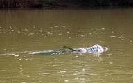 Hà Nội: Phát hiện xác chết nổi trên sông Hồng