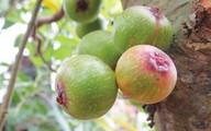 6 trái cây nên ăn trong mùa hè