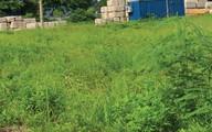 Vì sao dự án căn hộ 12 triệu/m2 ở Linh Đàm vẫn là bãi cỏ hoang?