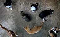 Ăn trộm để kiếm tiền nuôi hơn 100 con mèo