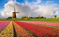 Những thiên đường hoa đẹp ngất ngây không thể không xem