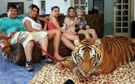 """Hoảng với gia đình nuôi 7 """"chúa sơn lâm"""" như thú cưng"""