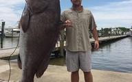 Con cá mú khổng lồ nặng hơn trăm ký, cao vượt đầu người