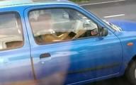 Một phụ nữ vừa đọc sách vừa lái xe với vận tốc 112km/h
