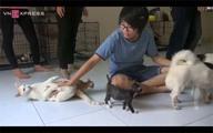 'Bệnh viện' của chó mèo hoang ở Sài Gòn