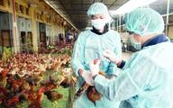 Phong tỏa chặt chẽ điểm phát sinh dịch cúm A/H5N6