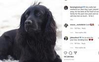 Chó cưng nhà William - Kate qua đời