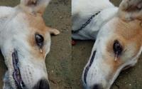 Chó cưng sủa liên tục trong đêm, nhà chủ không mảy may nghi ngờ, đến sáng thấy cảnh đau lòng mới biết nhờ con vật mà gia đình thoát nạn
