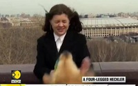 Chó 'cướp' micro của phóng viên trên bản tin truyền hình
