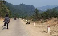 Đàn voọc thường xuyên tấn công người đi đường ở Quảng Trị sẽ được di dời