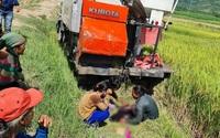Bé trai 8 tuổi bị máy gặt lúa tông tử vong khi đang bắt chuột