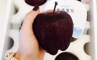 Qủa táo đen giòn ngọt gấp nhiều lần so với táo thông thường, bạn đã thử chưa?