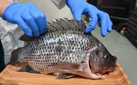 """Người phụ nữ bị vi khuẩn """"ăn cụt"""" bàn tay chỉ sau vài giờ từ vết xước do vảy cá gây ra, bác sĩ đưa ra 6 lời khuyên để ngăn ngừa bị nhiễm bệnh"""