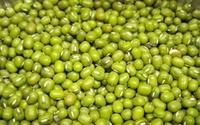 Trị 'giời leo' bằng hạt đậu xanh