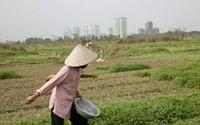 Chính sách thích ứng với tình trạng Đô thị hóa nhanh: Nắm bắt để phát triển
