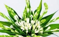 Vì sao hoa huệ được nhiều người chọn cúng mùa Vu lan?