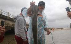 Bão tan, người dân hào hứng ra biển bắt cá... nước ngọt