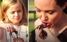 Món ăn nữ minh tinh Angelina Jolie yêu thích nhưng người thường lại vô cùng khiếp đảm