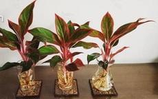16 loại cây trồng trong nhà không cần ánh sáng, dễ sống và tốt cho sức khỏe