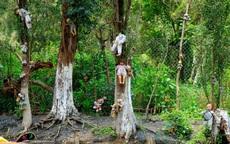 Kỳ lạ khu rừng tự sát Aokigahara ở Nhật Bản trở thành địa điểm du lịch mạo hiểm