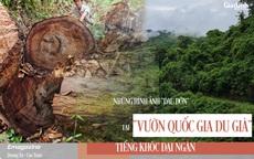 """Những hình ảnh """"đau đớn"""" tại rừng nghiến cổ thụ ở Vườn Quốc gia Du Già bị tàn phá"""