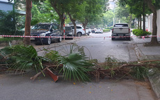 """Cành cây, bàn ghế, chậu hoa được tận dụng làm rào chắn bảo vệ """"vùng xanh"""" của Hà Nội"""