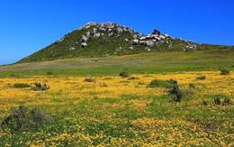 Cả một biển hoa rực rỡ giữa sa mạc Nam Phi