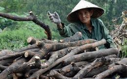 Bí quyết sống khỏe của cụ bà 72 tuổi vẫn đều đặn mỗi ngày vác hàng tạ củi mưu sinh