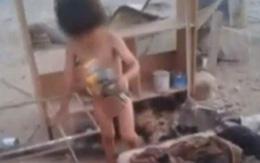 Bé 2 tuổi sống sót nhờ được chó cho bú sữa