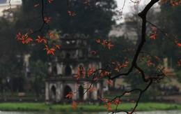 Hà Nội đẹp dịu dàng sau những ngày mưa phùn, chồi cây hé nụ
