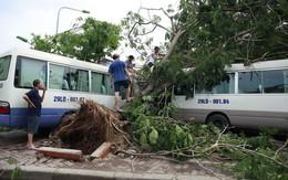Tin tức mới nhất bão số 1: Mưa dông, đề phòng gió giật ở khu vực Hà Nội