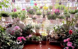 Ngắm sân thượng hoa trăm chậu không cần bí quyết chăm trồng