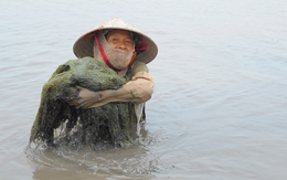 Những phụ nữ dầm mình vớt rong làm thạch