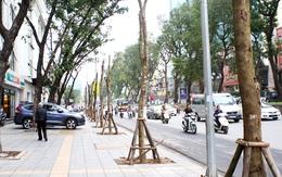 Nhói lòng cảnh đường phố Hà Nội vắng bóng cây