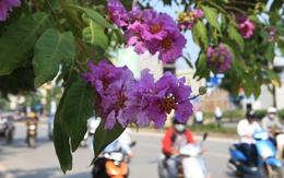 Ngắm Hà Nội đẹp ngỡ ngàng trong sắc tím hoa bằng lăng
