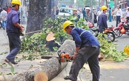 Lộ danh sách nhiều cán bộ bị đình chỉ sau vụ chặt hạ cây xanh Hà Nội