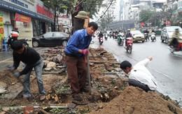 Cách chức, giáng chức nhiều cán bộ vụ chặt cây xanh ở Hà Nội