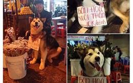 """Chú chó ở Đà Lạt treo biển """"bán hoa nuôi thân"""" thu hút hàng vạn lượt like"""