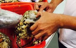Gần 1,4kg sừng tê giác giấu trong… đầu tôm hùm