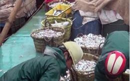 Công an điều tra người tung tin hải sản bị chết trắng