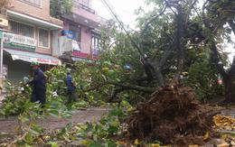Nhiều cây xanh ở Huế ngã đổ sau bão số 4